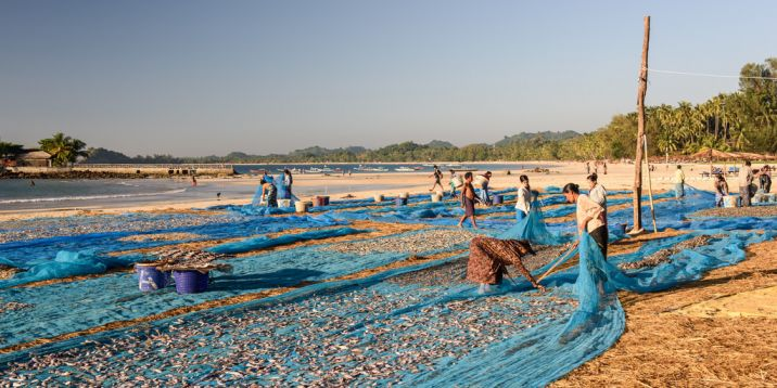 Myanmar Fish drying