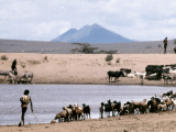 april 2016 - turkana